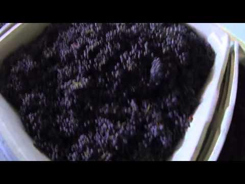 One Acre Wines - Harvest 2013