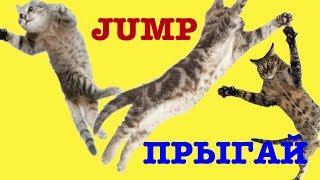 Funny Cats #17.Смешные Коты 2019, Кошки 2019. JUMP. Прыгай. lol.