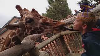 2018 HD FORGET CATS! Funny KIDS vs ZOO ANIMALS are WAY FUNNIER!   سيصدمك ما سوف يحدث   YouTube