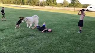 Funny Dog Epic Fail Compilation Video