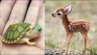 cute baby animals videos compilation cute moment of the animals - so cute #3