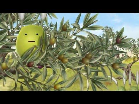 MO' clip 3: come ottenere un extra vergine di qualità
