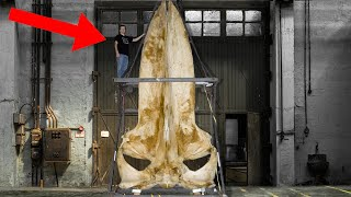9 Most Amazing Recent Discoveries