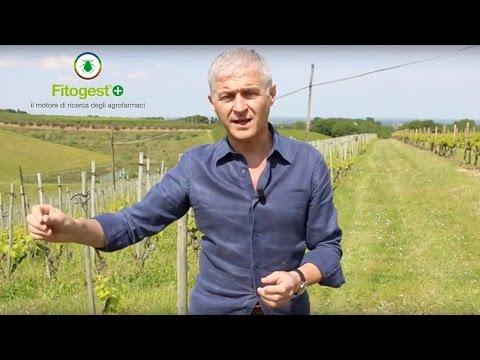 Trattamenti fitosanitari: come-quando-perché-se con Fitogest+