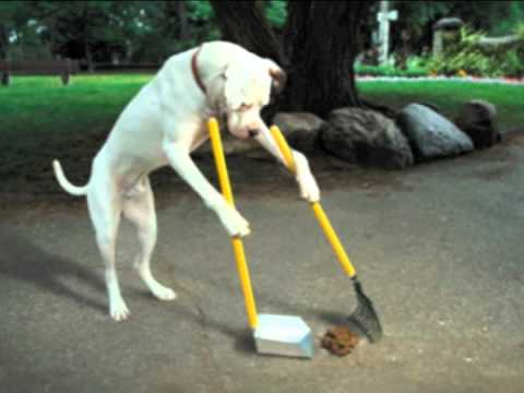 Dog Uses Pooper Scooper To Clean Up Own Mess Youtube