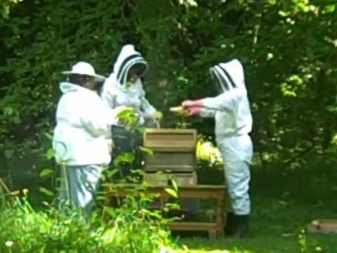 Hive inspection of the St Mary's Bees