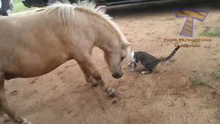 The funniest and most hilarious ANIMAL videos #1   Funny animal compilation   Watch & laugh! 1 mp4