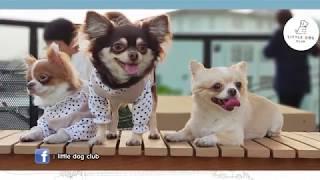 Pet lover by jerhigh O:A 10 มี.ค 2561 ตอน...Little Dog Club