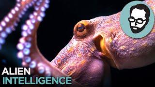 Cephalopods: Aliens From Earth | Random Thursday