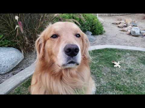 Happy National Dog Day [4K]  | Oshies World One Take