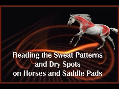 Reading the Sweat Pattern and Dry Spots on Horses and Saddle Pads - Sponsored by Saddlefit 4 Life