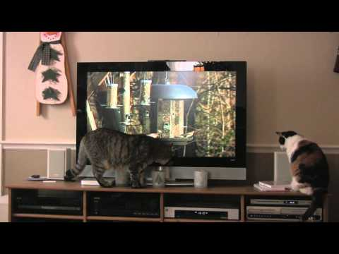 Cats and DVD