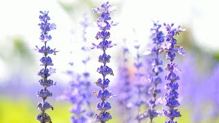 Morning Relaxing Music - Peaceful Piano Music & Guitar Music for Stress Relief (Stephen)