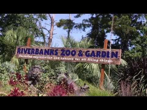 Riverbanks Zoo on Preparing for Hurricane Irma