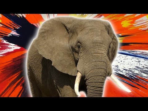 9 Elephant Facts That Are Larger Than Life