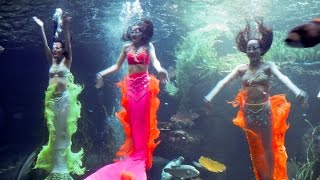 Show performed extremely attractive 3 cute mermaid in the beautiful Phu Quoc Vinpearl Land Aquarium