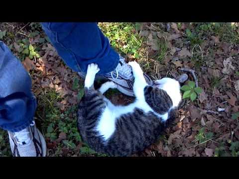 Our Loving Outside Kitties