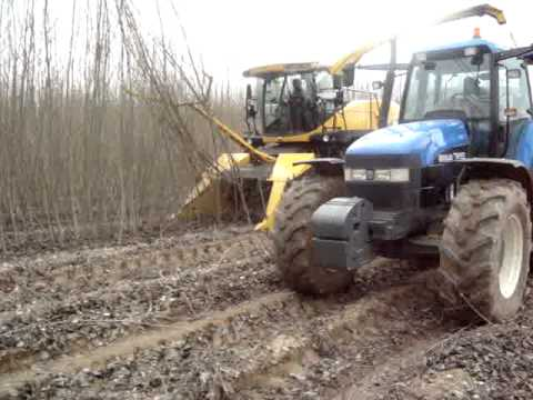 Cutting poplar in Spain for biomass