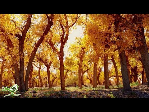 9 Hours of Relaxing Piano Music: Deep Sleep Music, Meditation Music, Spa Music  ★99