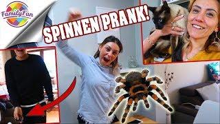 MEGA SPINNEN PRANK RACHE😣 -schreckliche Katzen Phobie - Family Fun