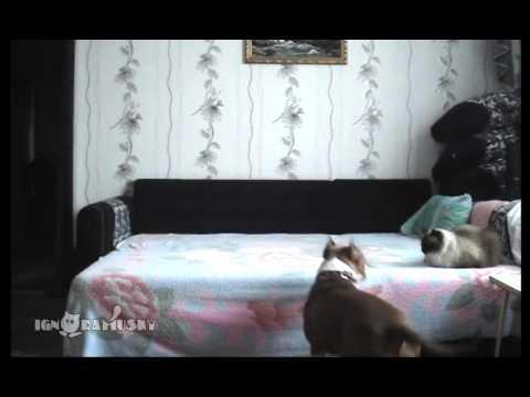 狗狗趁主人不在家偷跑到床上,从一开始的假正经到疯狂的滑稽动作..看完后整个人都笑翻了