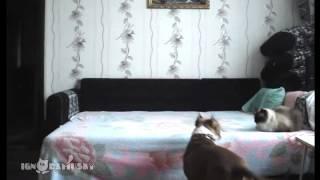 כלב לבד בבית