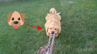 TRY NOT TO LAUGH At Funny Dog Video Compilation 2019 - Dog Fail 2019 🐶