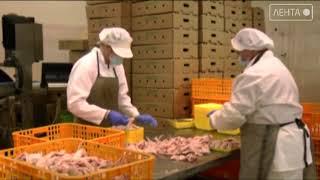 Более 9000 тонн курицы выпустили сельхозпроизводители Приморья в 2020 году