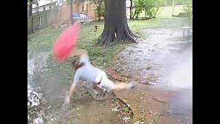 Izašao u dvorište sa psom, ali nije imao pojma da ga je milimetar dijelio od smrti