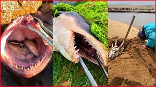 Catching Seafood 🦐🦀 Deep Sea Octopus (Catch Crab, Catch Fish) - Tik Tok #36