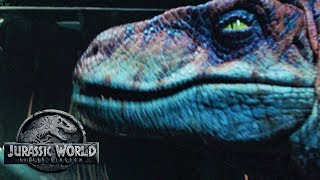 The Return of The Old Breed Of Raptors? | Jurassic World 3 Theory