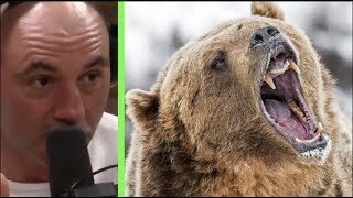 Joe Rogan - What to do If You're Attacked by a Grizzly Bear