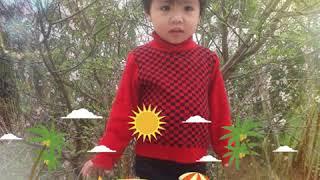 Nguyễn Ngọc Minh đan