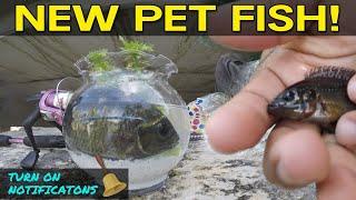 Catching Pet Exotic Fish for Aquarium | Monster Mike