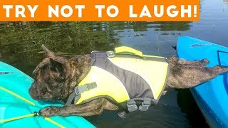 Try Not To Laugh Funniest Animal Compilation September  2018 | Funny Pet Videos - YouTube