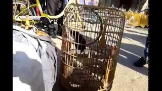 Chợ chim, thú rừng tại Lạng Sơn