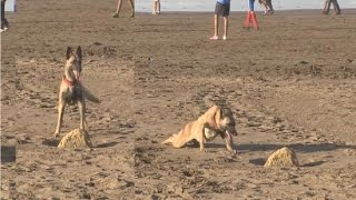 أنا و صاحبي الحيوان:شوفو كيفاش تروضو الكلاب بأقل مجهود       أنا و صاحبي الحيوان