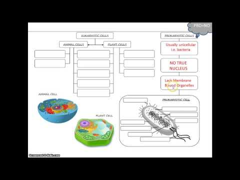 the franco german relationship in eukaryotic cell