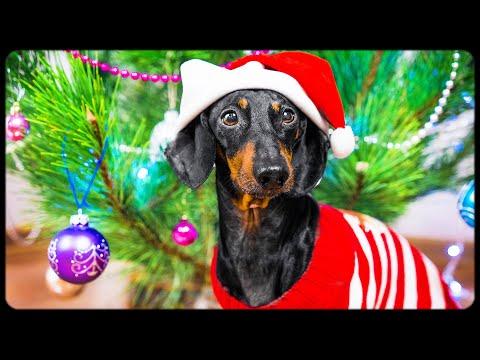 DOG decorating CHRISTMAS TREE! Funny animal video!