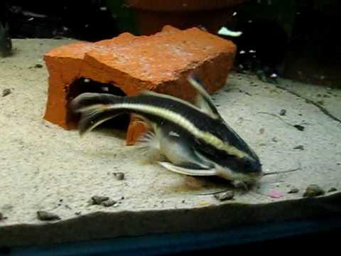 400l Catfish Aquarium Youtube