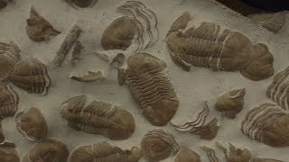 Royal Ontario Museum's fossil exhibit will explore the origins of life