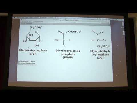 L Galactose Chair Anomeric Carbon