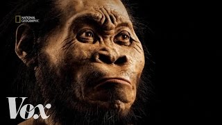 How scientists discovered Homo naledi, the new human ancestor
