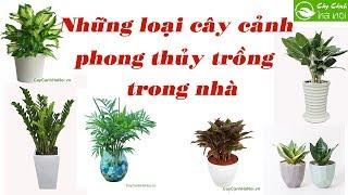 Những loại cây cảnh phong thủy trồng trong nhà