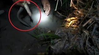 Nông dân đi thu bắt lươn đồng sau một ngày đặt bẫy