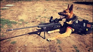 दुनिया के सबसे शातिर कुत्ते। Top 5 Most Smartest Dogs in the World.