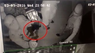 Нападение на правозащитников в Ингушетии
