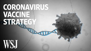 How Scientists Are Trying to Develop a Coronavirus Vaccine| WSJ