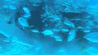 ロアタン島2