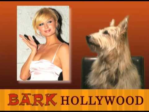 Bark Hollywood - Episode 10